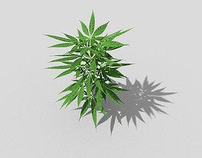 3D asset pot plant low poly