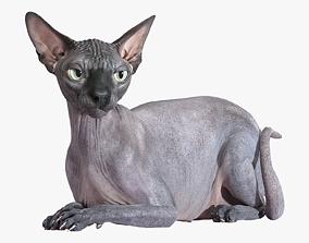 3D Sphynx Cat Black Rigged low