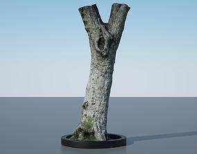 Tree Trunk - 13 3D model