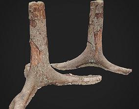 Dead tree 3d scan 4