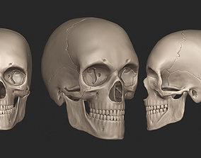 3D Human Skull High Poly