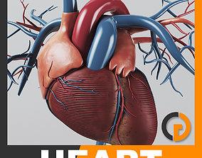 Human Heart - Anatomy 3D model