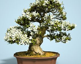Satsuki Bonsai Tree Blossom 7 3D asset