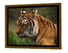 Tiger Frame 3D
