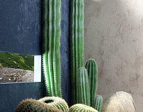 Saguaro and Golden Barrel Cactuses 3D model