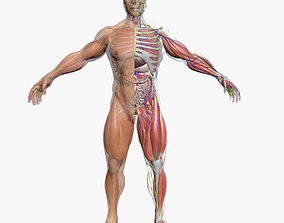 Ultimate Complete Male Anatomy 3DSmax