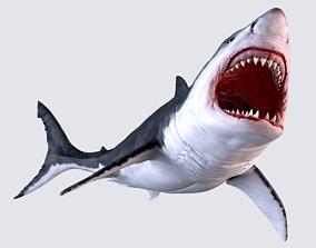 animals White Shark 3D model