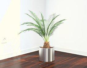VP Phoenix Palm v2 3D model