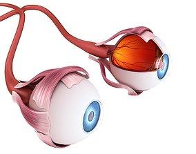 3D model Eye anatomy - inner structure