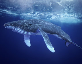 Humpback Whale Textured rigged Animated 3D model