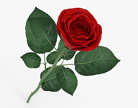 3D The Rose
