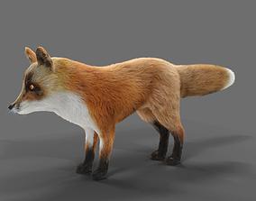 3D asset Hair Fur Red Fox 02