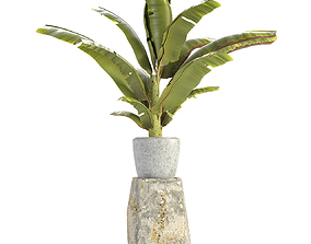 3D Plant in Pot Flowerpot Exotic Plant trees