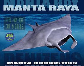 3D model Manta Ray