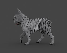 bulldog 3D UVWD-011 Dog Textures Only