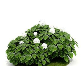 3D model Flowering Plant With White Flowers