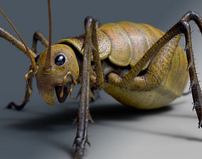 3D asset Cricket - giant weta