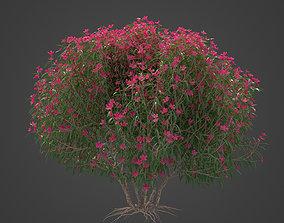 3D model 2021 PBR Oleander Collection - Nerium Oleander