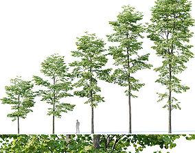 Tilia europaea Nr 8 H7-19m Five forest trees 3D model