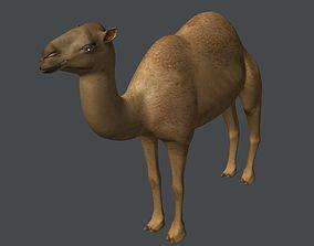 animal 3D Camel
