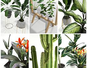 3D model Set plants