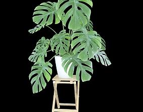 Pot Plant Monstera 3D model