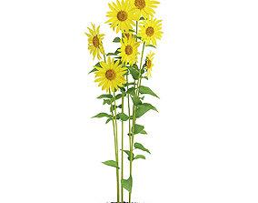 Sunflowers Helianthus 3D model