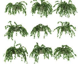 Ivy in pot 9 models v2