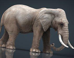 ivory ELEPHANT 3D model realtime