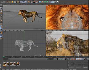 3D Lion Savane