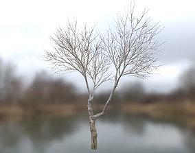 Autumn Dry Tree Scan 2 Full-Size 3D asset
