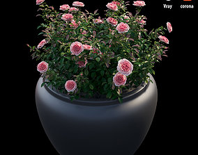 3D model Rose plant in pot