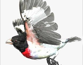 3D Rose-breasted grosbeak - rigged - animated