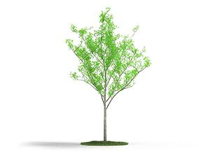 3D Thin Green Leaf Tree