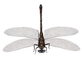 animal 3D printable model DragonFly