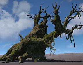 Ancient Tree V10 3D model