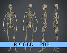 Rigged Human Skeleton 3D model VR / AR ready PBR