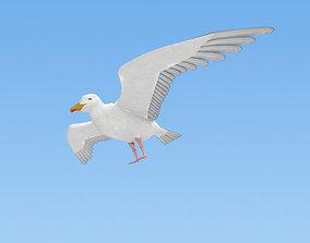 Common Gull 3D model