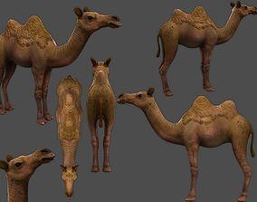 camel 3D asset