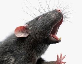 3D model Rat Fur Rigged Black