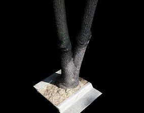 forest Big Tree 3D model