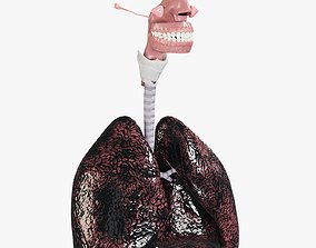 Respiratory System Smokers Lungs Stage Heavy 3D