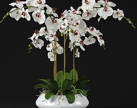 Orchid 11 3D