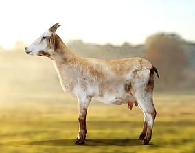 3D model Goat - Male and Female