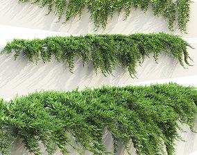 Juniperus Creeping 01 3D