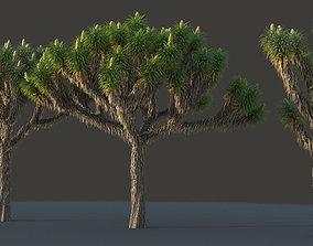 3D XfrogPlants Joshua Tree - Yucca Brevifolia