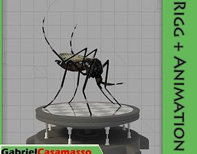 3D asset Aedes Aegypti