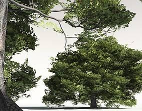 EVERYPlant English Oak 10 -- 10 Models