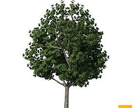 Sketchup Tree 06 3D
