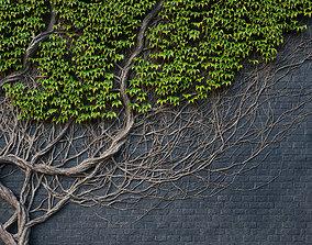 3D model ARCHICG PLANTS IvyWalls vol 1 14